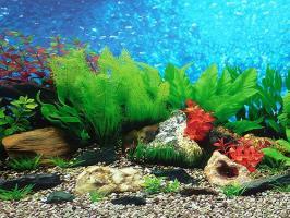 Фон для аквариума Barbus Морская лагуна/Гаваи